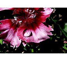Rain Drops And Petals Photographic Print