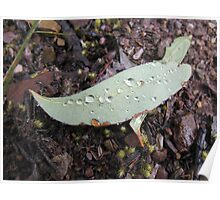 Raindrops on a Fallen Leaf - Molonglo Gorge ACT Poster
