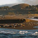 Mouth of the Russian River by ToddDuvall