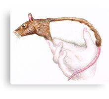 a rat in the hand... Canvas Print