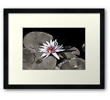 Water Lily ~ I Stand Here Alone and Yet Strong Framed Print