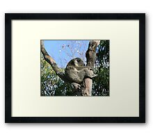 I'm Sleepy... Framed Print