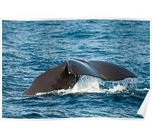 Diving Sperm Whale Poster