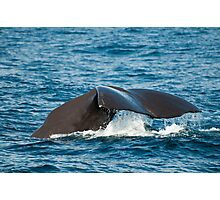 Diving Sperm Whale Photographic Print