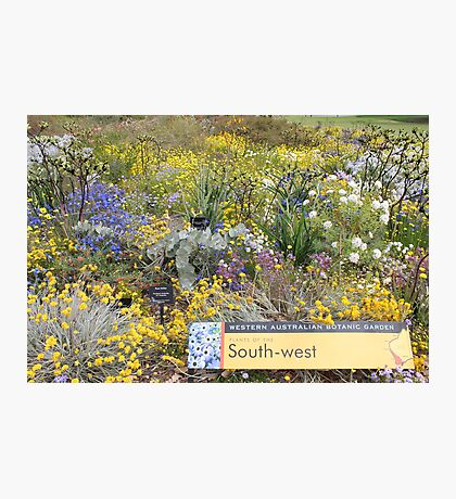 Wildflowers of the South West of Western Australia Photographic Print