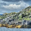 Kittiwakes On Inner Farne ~ Farne Islands by Sandra Cockayne