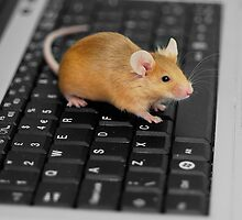 Keyboard and Mouse by evelynlarner