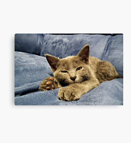 Excuse me .. Cant you see im sleeping here Canvas Print