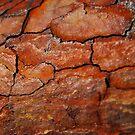 crust by NordicBlackbird