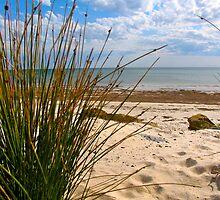 Glenelg North Beach, Adelaide by Ali Brown