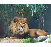King of the Jungle Photographic Print