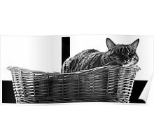 Heaven is a cat Basket  Poster