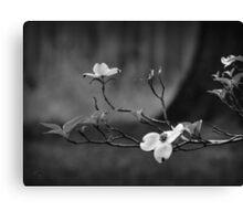Dogwood Branch 001 BW Canvas Print