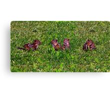 Baby Chipmunks First Day Collage Canvas Print