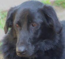 Soulful Black Dog by SmilinEyes
