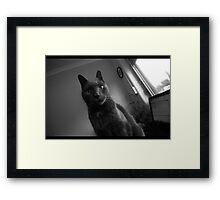 HRH Jules I Framed Print