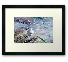 Downy Dewdrop Framed Print