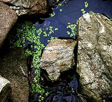 Duckweed on the Rocks by RC deWinter