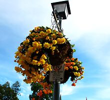 Floral Signposts by MarianBendeth