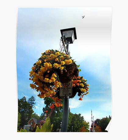 Floral Signposts Poster