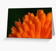 Calendula officinalis in early morning dew Greeting Card