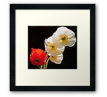 Poppies on Black Framed Print
