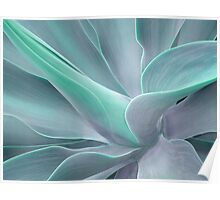 Soft Tint Agave Attenuata Poster