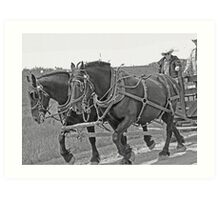 Black Team - Bar U Ranch Art Print