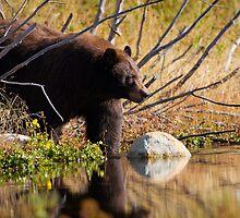 Cinnamon Bear by Wil Bloodworth