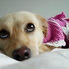 Cutie <3 by KanaShow