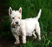 A Scottie Dog by Forfarlass