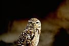 Burrowing Owl portrait by buttonpresser