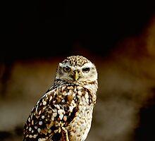 Burrowing Owl portrait by buttonpresser
