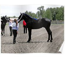 Magnificent Percheron Poster