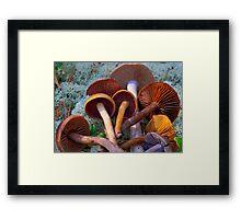 Colourful Genus Cortinarius Framed Print