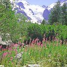Morteratsch Glacier Trail Pontresina Switzerland by Monica Engeler