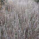 Frosty Meadow by Christopher Clark