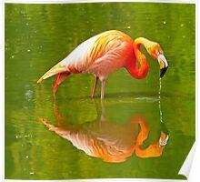 Flamingo Reflection Poster