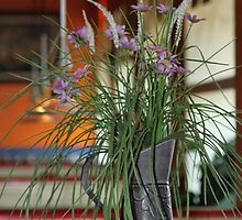 Purple flowers in a pitcher by amjanvrin