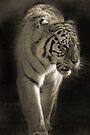 TIGER II by Debbie Ashe