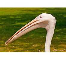 Pelican Head Photographic Print