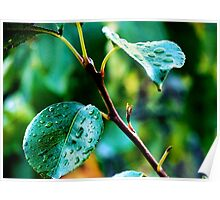 Water from a Leaf Poster