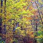 Ozark National Forest, White Rock Wildlife Management Area by David  Hughes