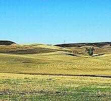 Early Morning Wheat Field by Mike  Kinney