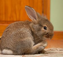 'Ginger' our new bunny by Jon Lees