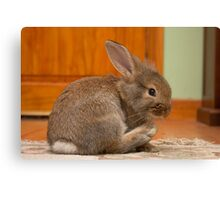 'Ginger' our new bunny Canvas Print