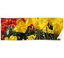 Red & Yellow - Tulips Poster