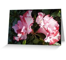 Shade & Light! Twin 'Astrid Leopold' Azalea flowers in a pot! Greeting Card