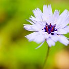 Little Flower by DonDavisUK