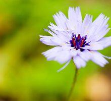 Little Flower by DonDavisUK